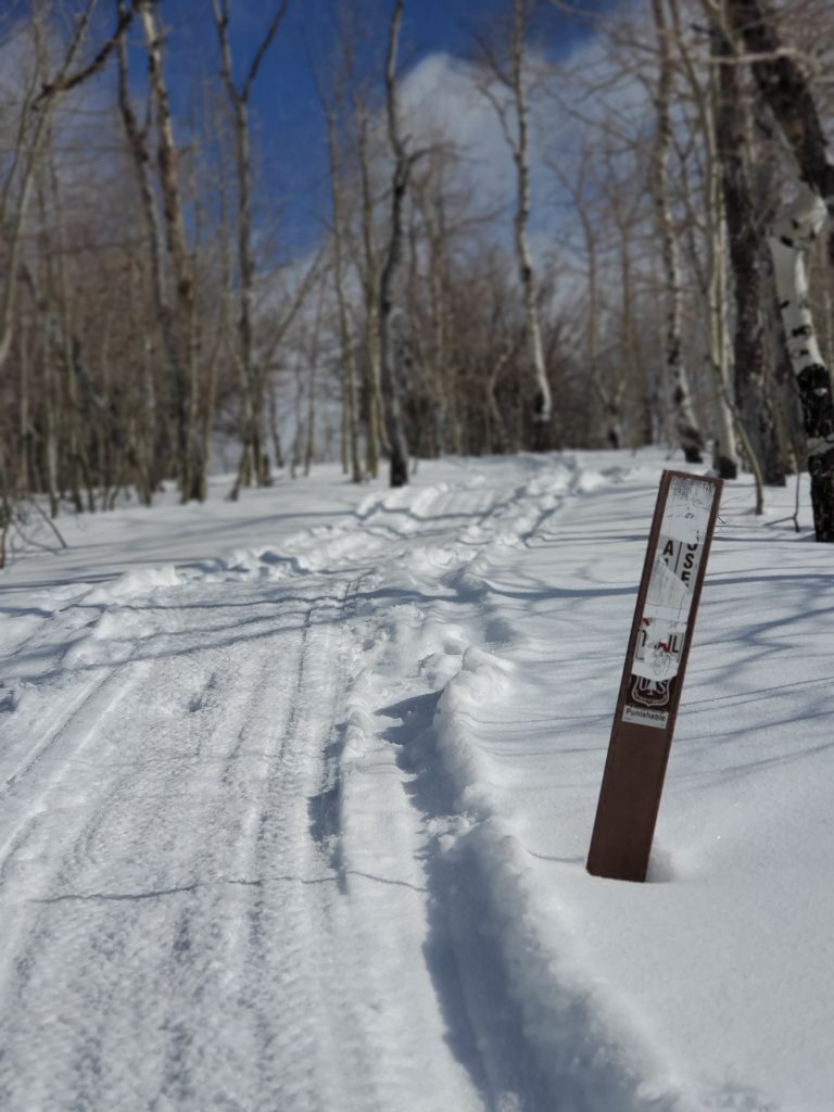 Forest service marker next to a track in the snow